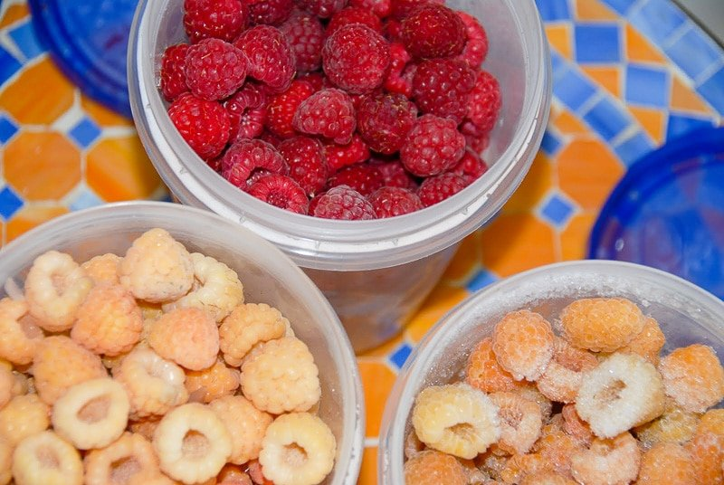 raspberries in freezer containers