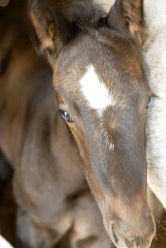 three week old horse