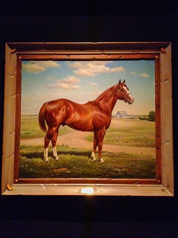 Horse portrait at American Quarter Horse Museum Amarillo Texas