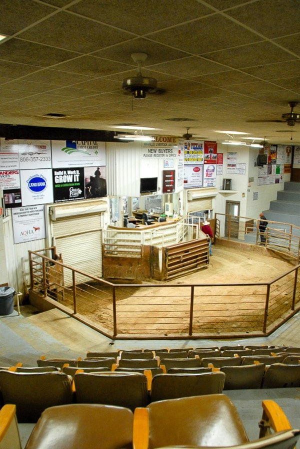 Cattle auction ring at the Stockyard in Amarillo Texas