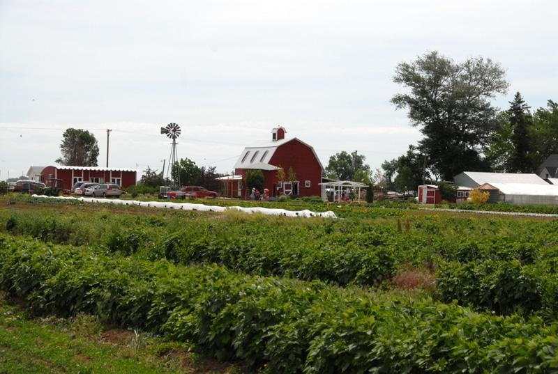berry patch farms brighton colorado