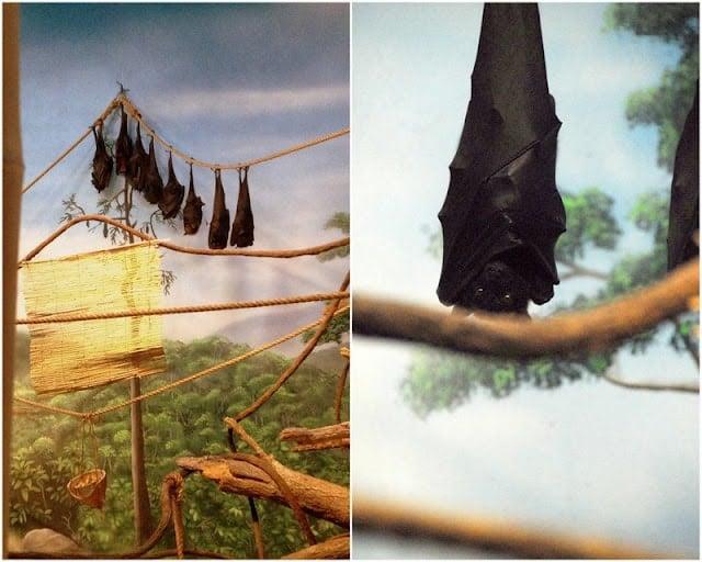 bats handing upside down at zoo