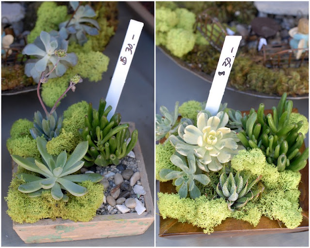 A bunch of different types of plant gardens