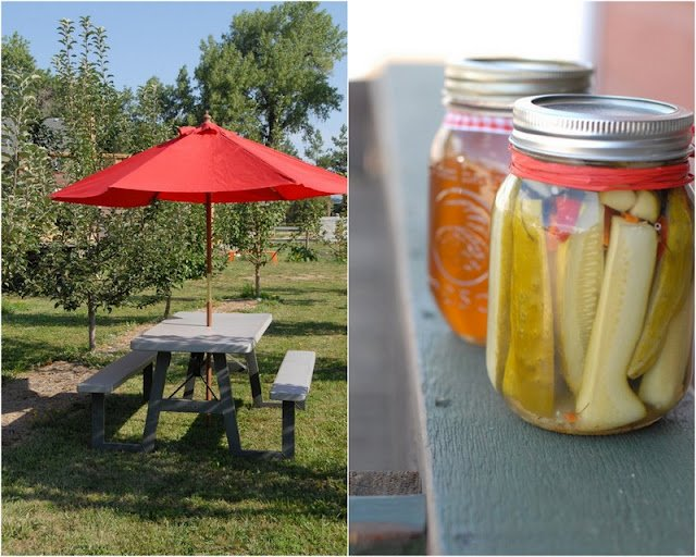 2 photo collage with Homemade pickles on right and picnic table in apple orchard on left