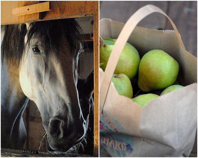 2 photo collage with white Horse in stable on left and fall pears on right