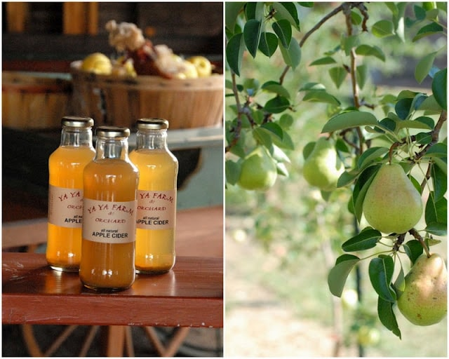 2 photo collage Freshly pressed Apple Cider in bottles on left and Apple Tree on right| BoulderLocavore.com