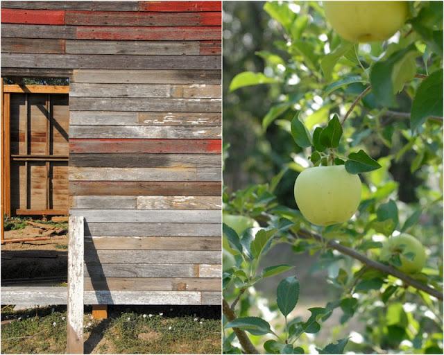 2 photo collage of Old Barn on left and U Pick Apples Ya Ya Farm on tree on right