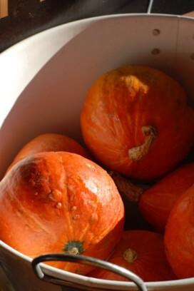 bin of orange squash