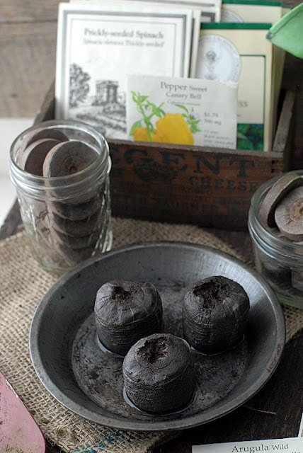peat pots in a saucer with seed packets