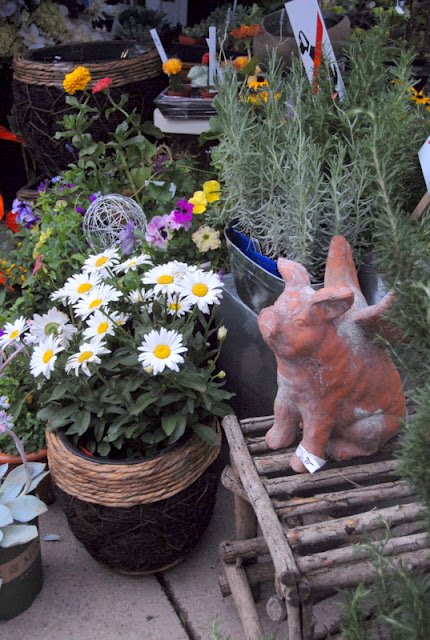 potted plants and resin pig with wings