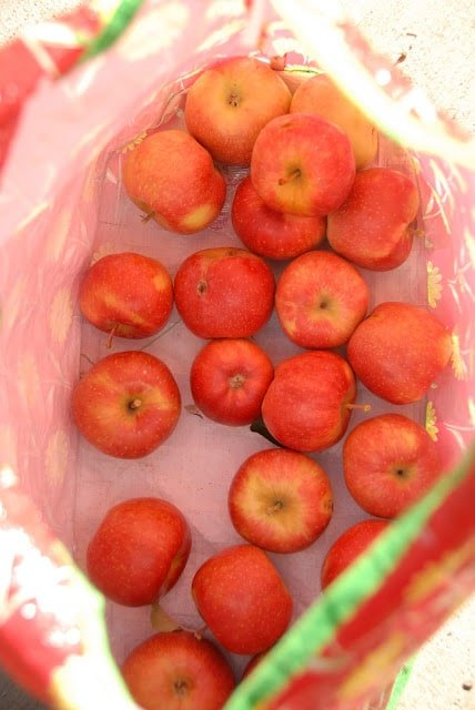 bag of hand picked apples