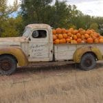 Loukonen Farm: Not Just A Gem of a Local Pumpkin Patch
