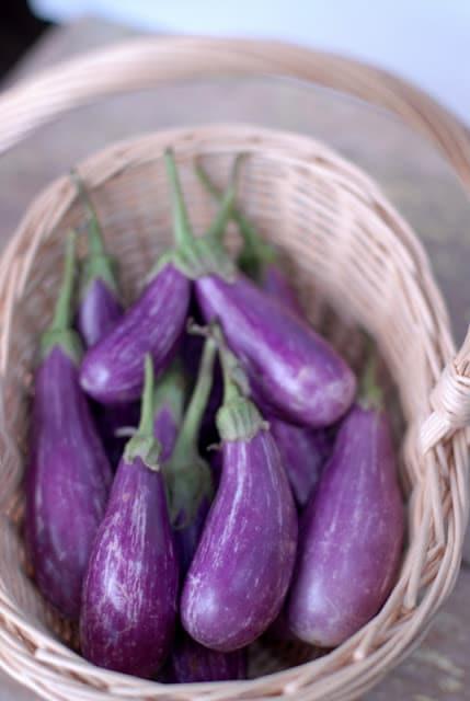 fairytake eggplant in basket