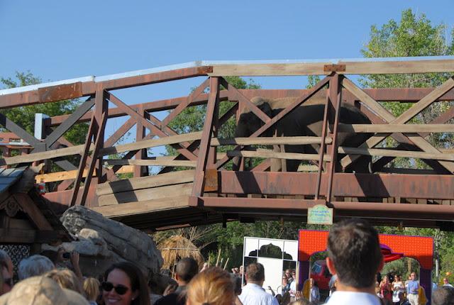 elephant on a bridge
