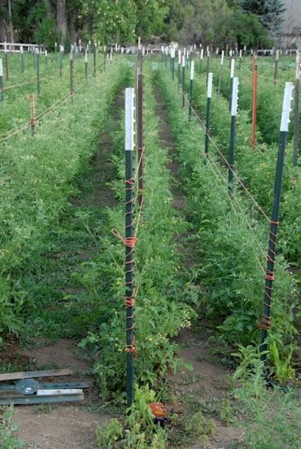 farm plant rows
