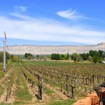 Summer Getaway: Colorado's Grand Valley Wine Country (Palisades/Grand Junction CO)