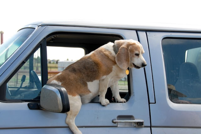 A dog sitting on the seat of a car