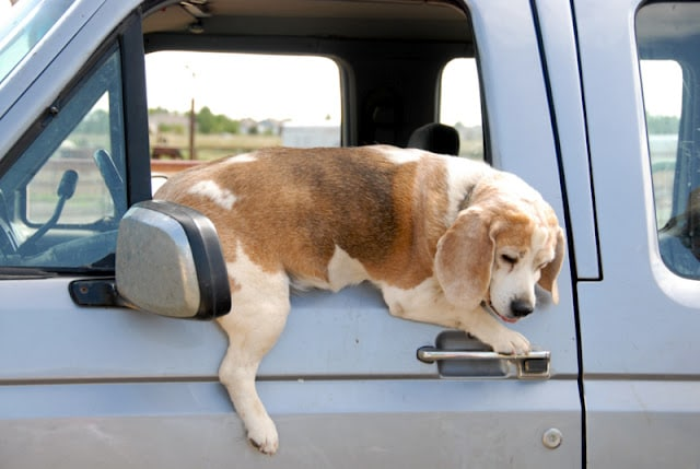 A dog sticking his head out the window of a car