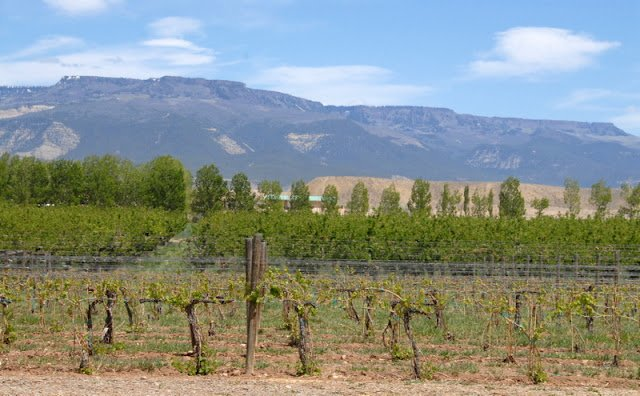 Colorado's Grand Valley Wine Country (Palisades/Grand Junction CO)