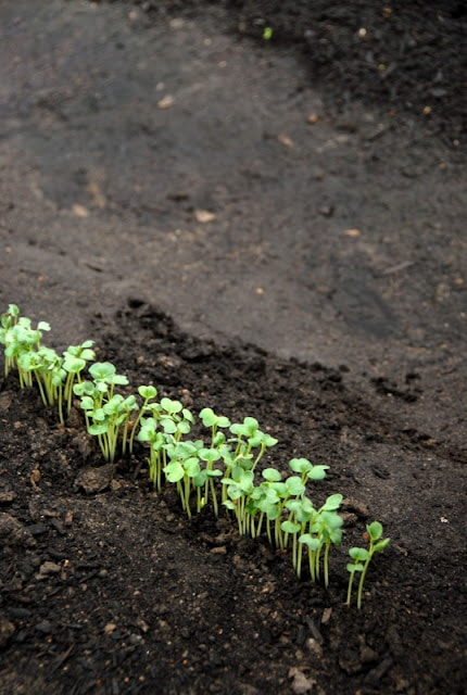 A close up of plant starters