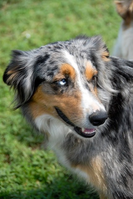 A dog standing on grass