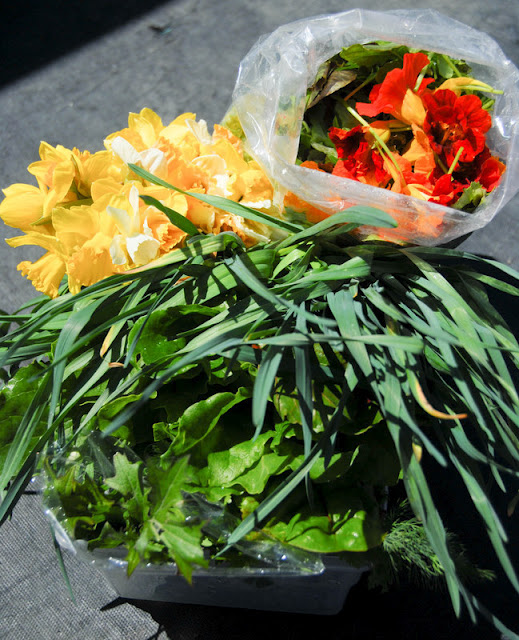 fresh greens and edible flowers
