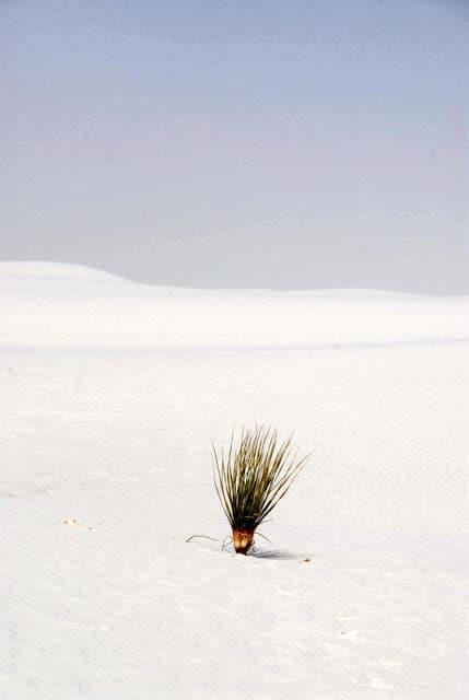 white sand dunes at Alamogordo NM