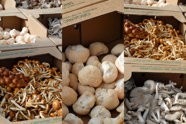 types of mushrooms in boxes