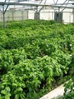 Fresh Colorado Greens in Winter: Jay Hill Farm