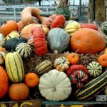 Miller Farms: Fall Harvest Festival (Platteville, CO)