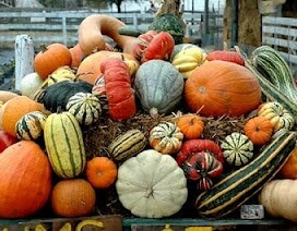 a pile of pumpkins and colorful gourds