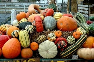 Winter Squash at Miller Farm | BoulderLocavore.com