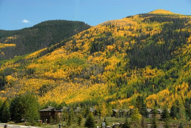 Vail Colorado Fall color BoulderLocavore.com