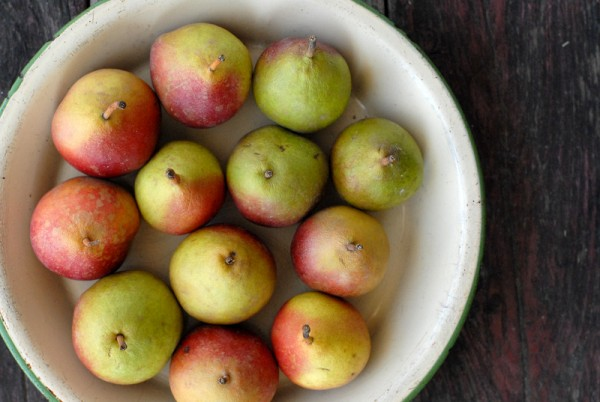 Seckel pears in pie plate from above