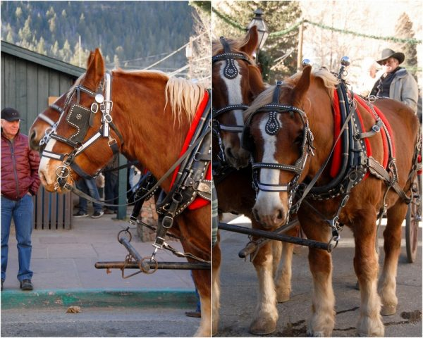Draft Horses pulling Christmas Wagon with Roasted Chestnuts