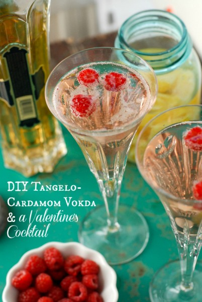 DIY Homemade Tangelo-Cardamom Vodka Valentine's Cocktail | BoulderLocavore.com