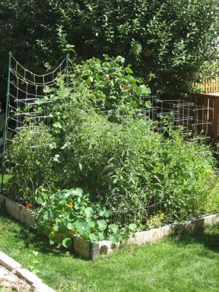 Summer Square Foot Garden | BoulderLocavore.com