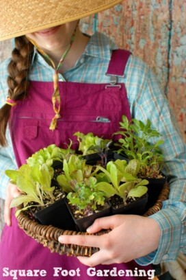 Square Foot Gardening - holding plants