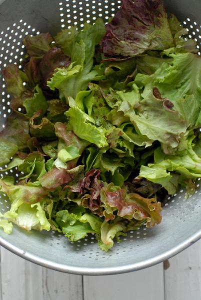 Mixed spring lettuce - BoulderLocavore.com