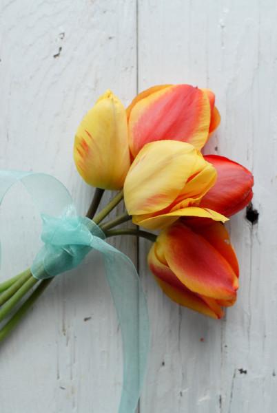 Tulips- BoulderLocavore.com