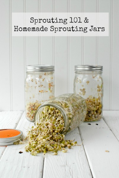 How to grow sprouts at home with a Sprouting 101 guide and homemade sprouting jars tutorial - BoulderLocavore