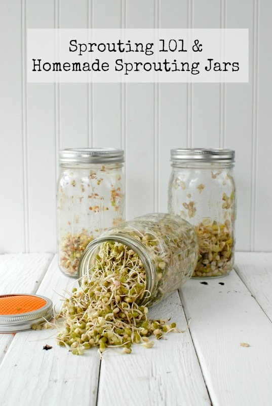 Sprouting 101, Homemade Sprouting Jars {tutorial} & 'DIY Mason Jars' Giveaway