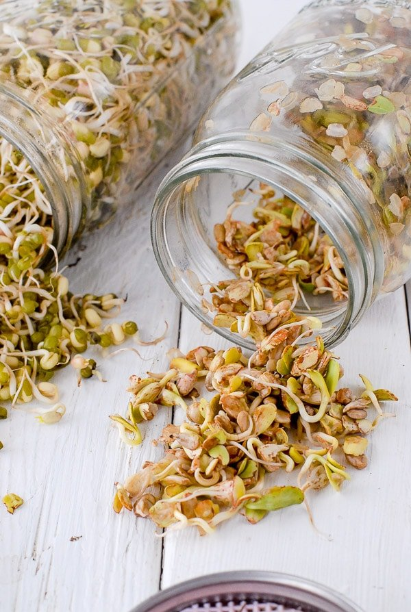 sprouted sunflower seeds in homemade sprouting jar