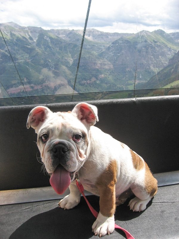 Baby Lola in Telluride gondola - BoulderLocavore.com