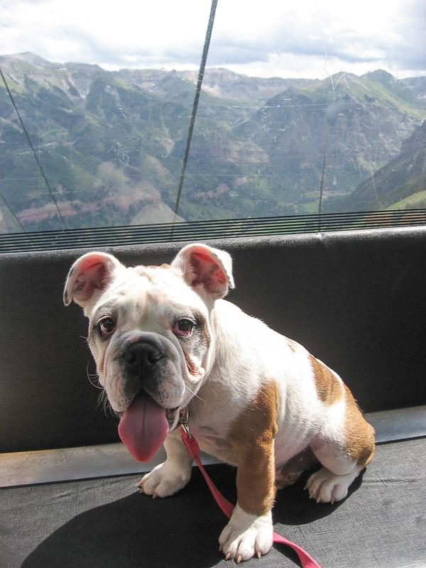 Baby Lola in Telluride gondola