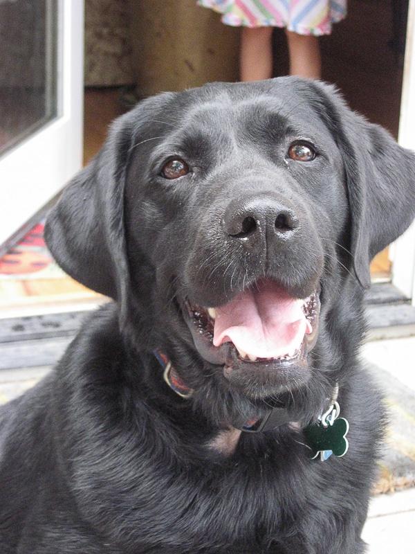 Coal the Labrador retreiver