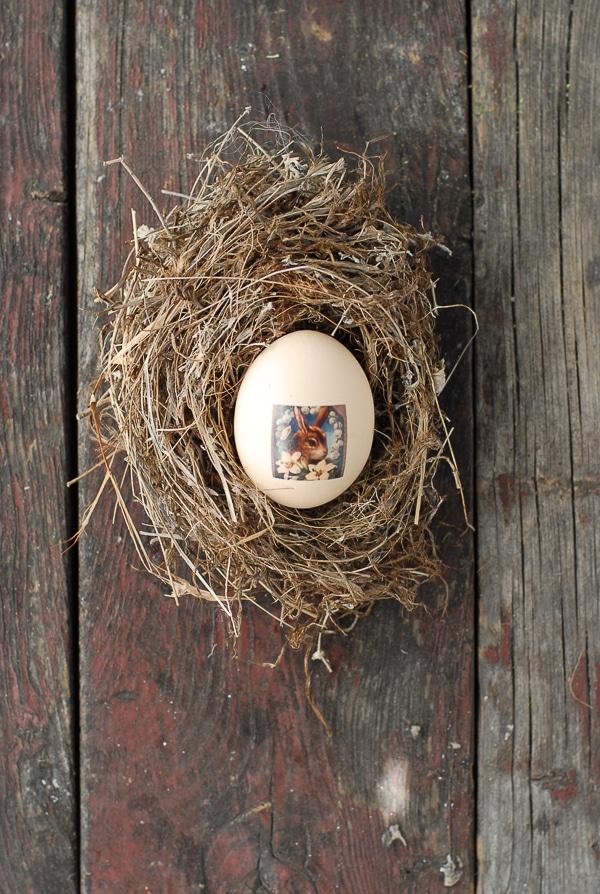 Tatooed Easter Egg in Bird Nest - BoulderLocavore.com