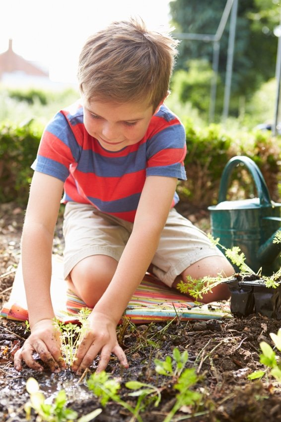 Boy Planting Seedlings In Ground On Allotment | BoulderLocavore.com