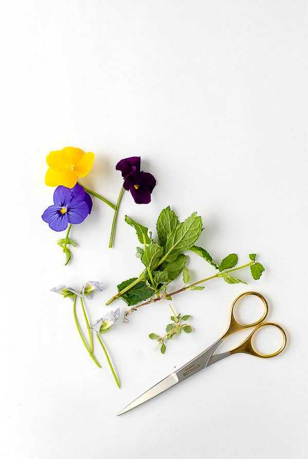 Purple and yellow pansies, fresh mint sprigs, lemon thyme and gold handled scissors BoulderLocavore.com