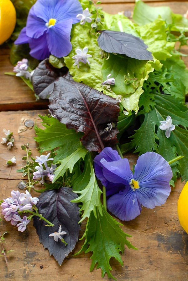 Fresh spring lettuce, greens and edible flowers